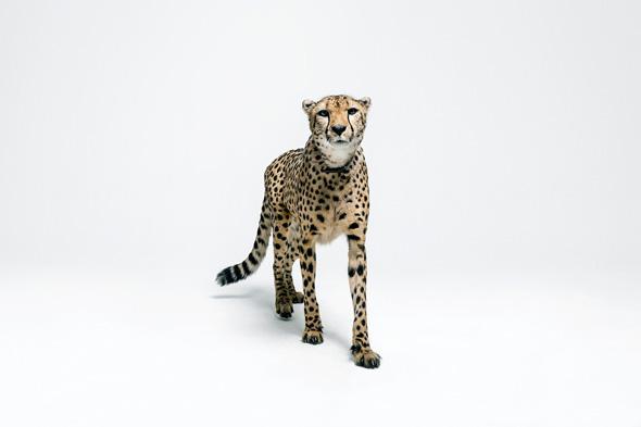 Masterdis Animal Camo Image Photo Shooting by Robert Wunsch