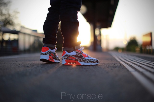 phylonsole