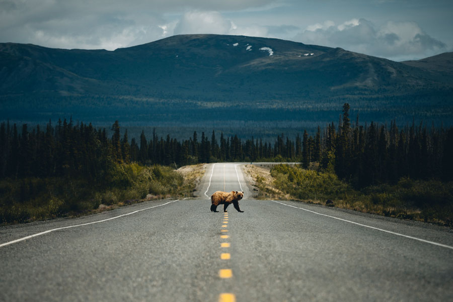 Johannes Höhn - Pangea Productions Photography (Kluane National Park)